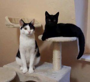 Minka und Tochter Molly suchen ein Zuhause