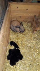 8 kleine Hasenbabys
