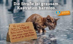 Spendenaufruf für die Kastration freilebender Katzen