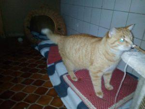 Garfield sucht einen Besitzer