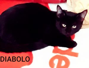 Diabolo & Rambo