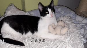 Pauli & Jeys