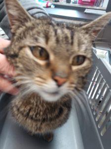 Katze in 95505 Immenreuth gefunden !
