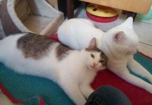 Basti & Tom ♡