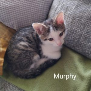 Piet, Sepp, Murphy & Nina