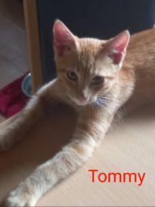 Timmy, Tommy und Rossi