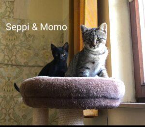 Momo & Seppi