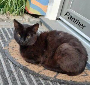 Panther 🐾