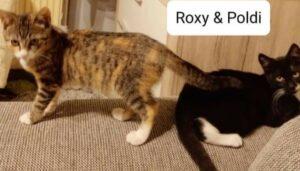 Roxy & Poldi
